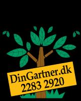 dg-logo1